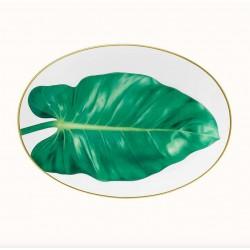 Passifolia ovale